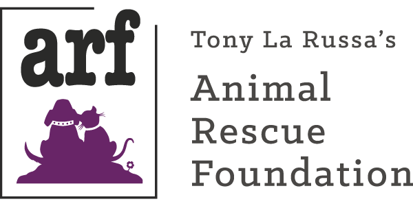 One Hour Gives Back to Animal Rescue Foundation